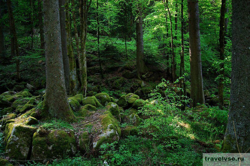 Чёрный лес в Германии