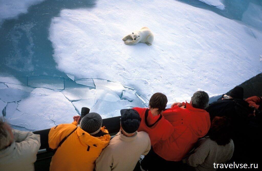 развитие турбизнеса в Арктических просторах